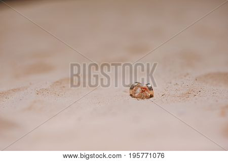 Two Rings Lie On A Crab On The Sand