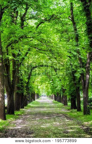 Alley of trees in Kerepesi cemetery Budapest - Hungary