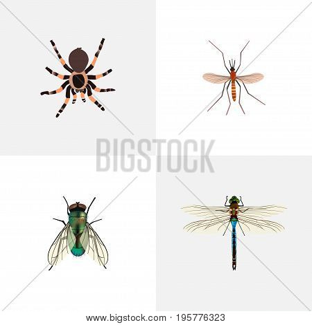 Realistic Housefly, Gnat, Damselfly And Other Vector Elements