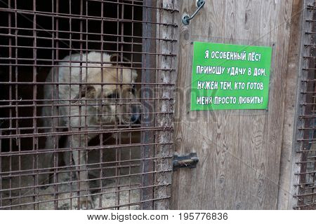 ST. PETERSBURG, RUSSIA - JUNE 30, 2017: Dog in the shelter for homeless animals. The label: