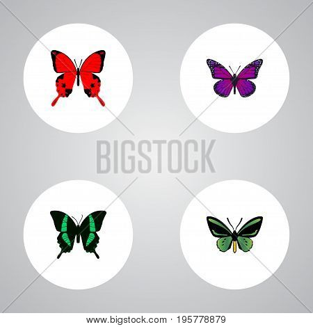 Realistic Sangaris, Beauty Fly, Tropical Moth And Other Vector Elements