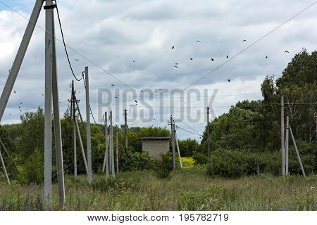 flock of birds black crows are flying over the telephone poles clearing countryside