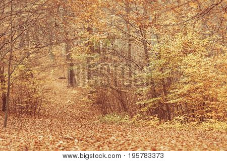 Autumnal Bushes In Forest.