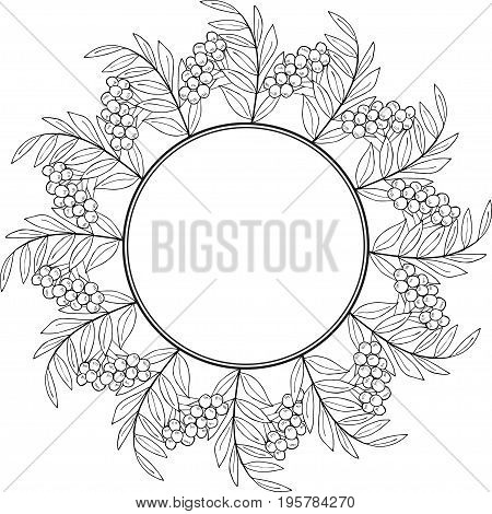 Ink drawing of rowan or rowanberry. Berries and rowan berries with leaves, hand drawn in rustic design, classic drawing element of wild ash, pit or rowan-tree. Border, round frame, black and white.