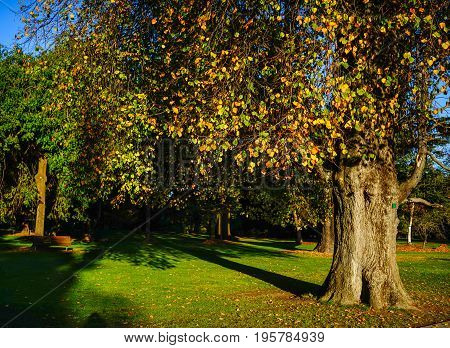Huge Trees At Autumn In The City Park