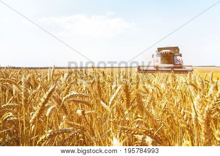 The work of a combine harvester on a golden wheat field on a sunny day against a blue sky. The concept of bread and wheat production