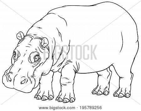 naturalistic vector hand drawing illustration of hippo or Hippopotamus amphibius or river horse