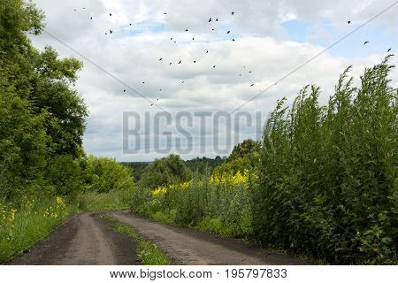 flock of birds flying over a dirt road countryside green grass yellow flowers trees
