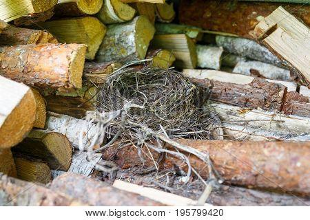 The bird's nest lies on a pile of firewood near the barn