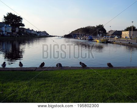 Ducks in a row - Bude canal North Cornwall