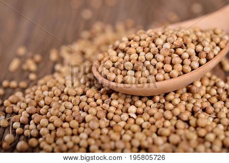 dry coriander seeds on wooden spoon and on wooden background
