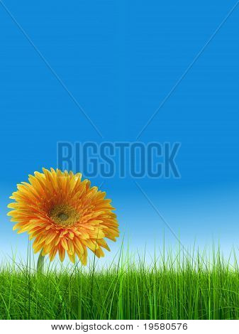high resolution 3d green grass over a clear blue sky as background and a nice yellow gerbera flower at horizon. Ideal for nature,green or sport designs.v