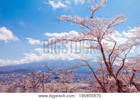 Cherry blossom sakura in spring season and Mt. fuji on the blue sky backgroundthe most famous in Japan to traveling.