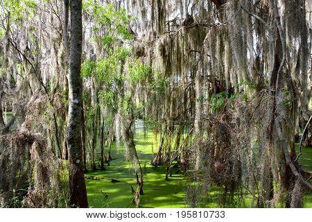 Swamp at Circle B Bar Reserve in Florida.