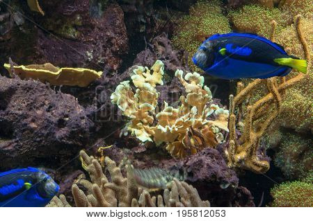 Underwater shot scene sea anemone tropical marine animals and corals.