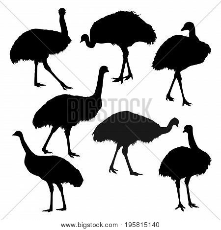 Collection of vector silhouettes of an ostrich emu isolated on white background.