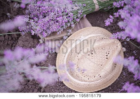 A Bouquet Of Lavender, Book And A Straw Hat On The Soil