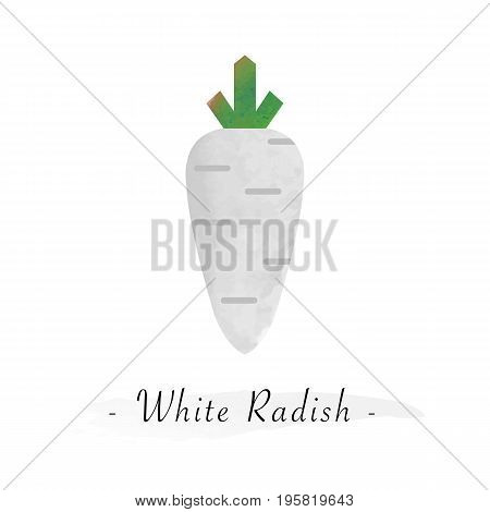 Colorful Watercolor Texture Vector Healthy Vegetable White Radish