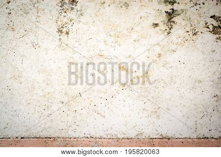 Cement Wall After Remove Coatbuttons, Mexican Daisy