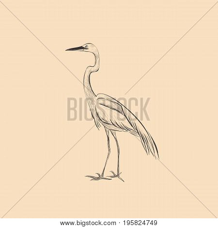 Heron is a sketch vector illustration. Hand sketch of heron design