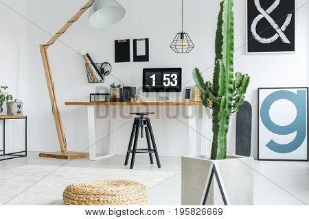 Cactus In Room