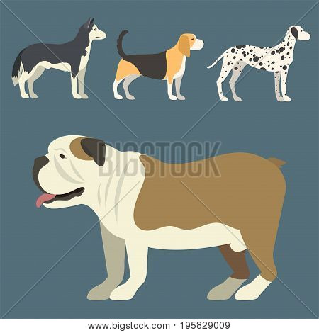 Funny cartoon dog character bread in flat style happy puppy and isolated friendly mammal vector illustration. Domestic element flat comic adorable mascot canine.