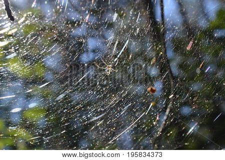 The spider in its web is brightly illuminated by the sun's rays in the early morning in the summer