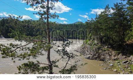 Landscape of the Altai Mountains, Siberia, the rapid flow of the mountain river Katun, the precipice and pine trees