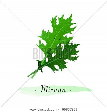 Colorful Watercolor Texture Vector Healthy Vegetable Mizuna