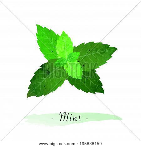 Colorful Watercolor Texture Vector Healthy Vegetable Mint