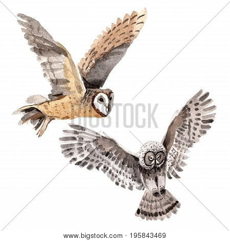 Sky bird owl in a wildlife by watercolor style isolated. Wild freedom, bird with a flying wings. Aquarelle bird for background, texture, pattern, frame, border or tattoo.