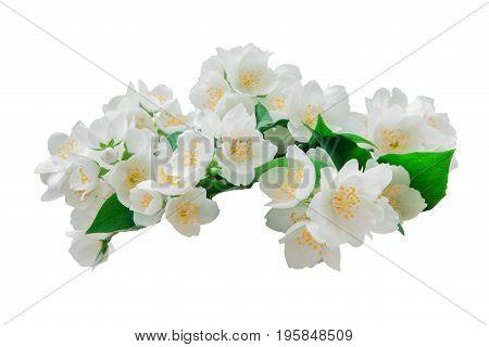 Many white jasmine flowers isolated on a white background