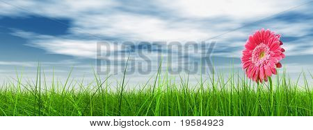 high resolution 3d green grass over a blue sky banner with white clouds as background and a nice pink gerbera flower at horizon