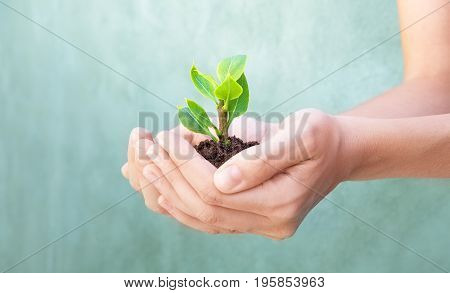 Plant in hands, earth, love for life
