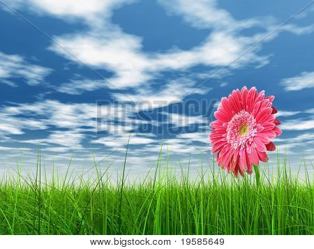 high resolution 3d green grass over a blue sky with white clouds as background and a nice pink gerbera flower at horizon