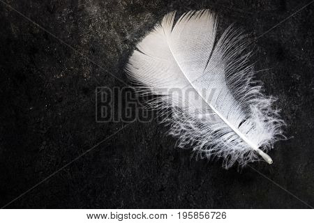 White clean delicate bird feather on black concrete stone background contrast purity equilibrium top view