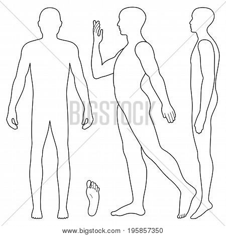 Fashion body full length bald template figure silhouette (front side stand and going view) vector illustration isolated on white background