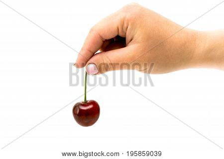 Red Cherry In Hand On White Background