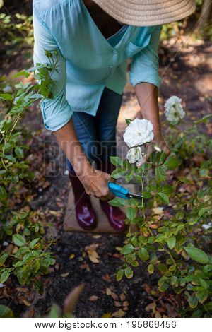 Low section of senior woman cutting flowers with pruning shears at backyard