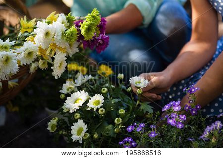 Cropped image of granddaughter and grandmother plucking flowers in backyard