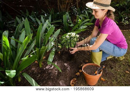 High angle view of woman crouching while holding flowers at backyard