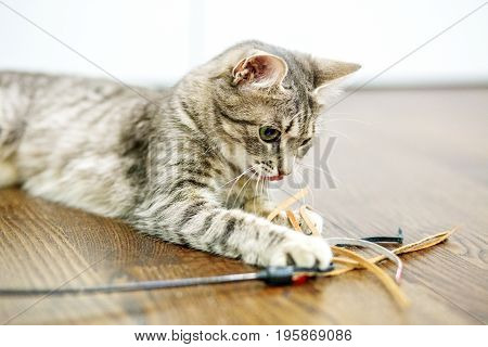 Beautiful domestic cat playing in the room. The concept of pets.