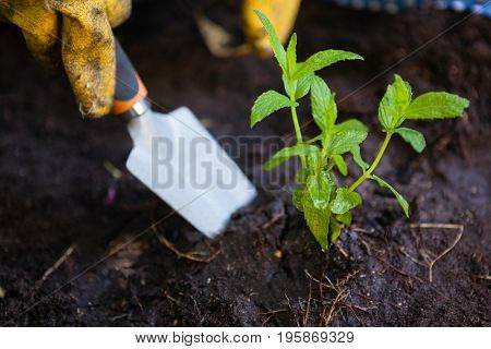 Cropped image of woman wearing gloves digging soil with trowel at backyard