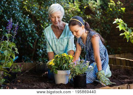 Grandmother and granddaughter planting various flower pots at backyard