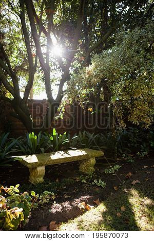 Stone bench by plants against surrounding wall at backyard