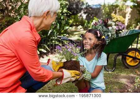 Smiling girl looking at grandmother while giving flowering pot at backyard