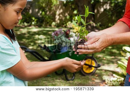 Midsection of senior woman giving seedling to granddaughter at backyard