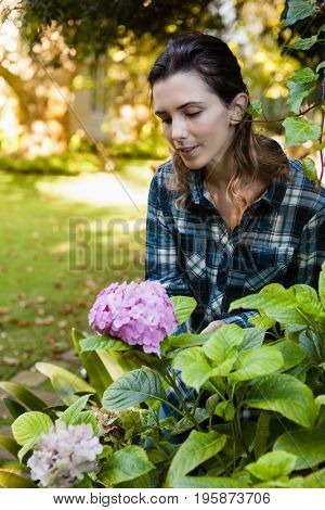 Beautiful woman crouching while looking at purple hydrangea bunch in backyard