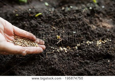 Cropped hands of woman with seeds over dirt at backyard