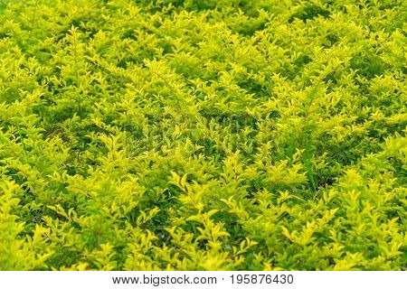 Leafy Plants Background